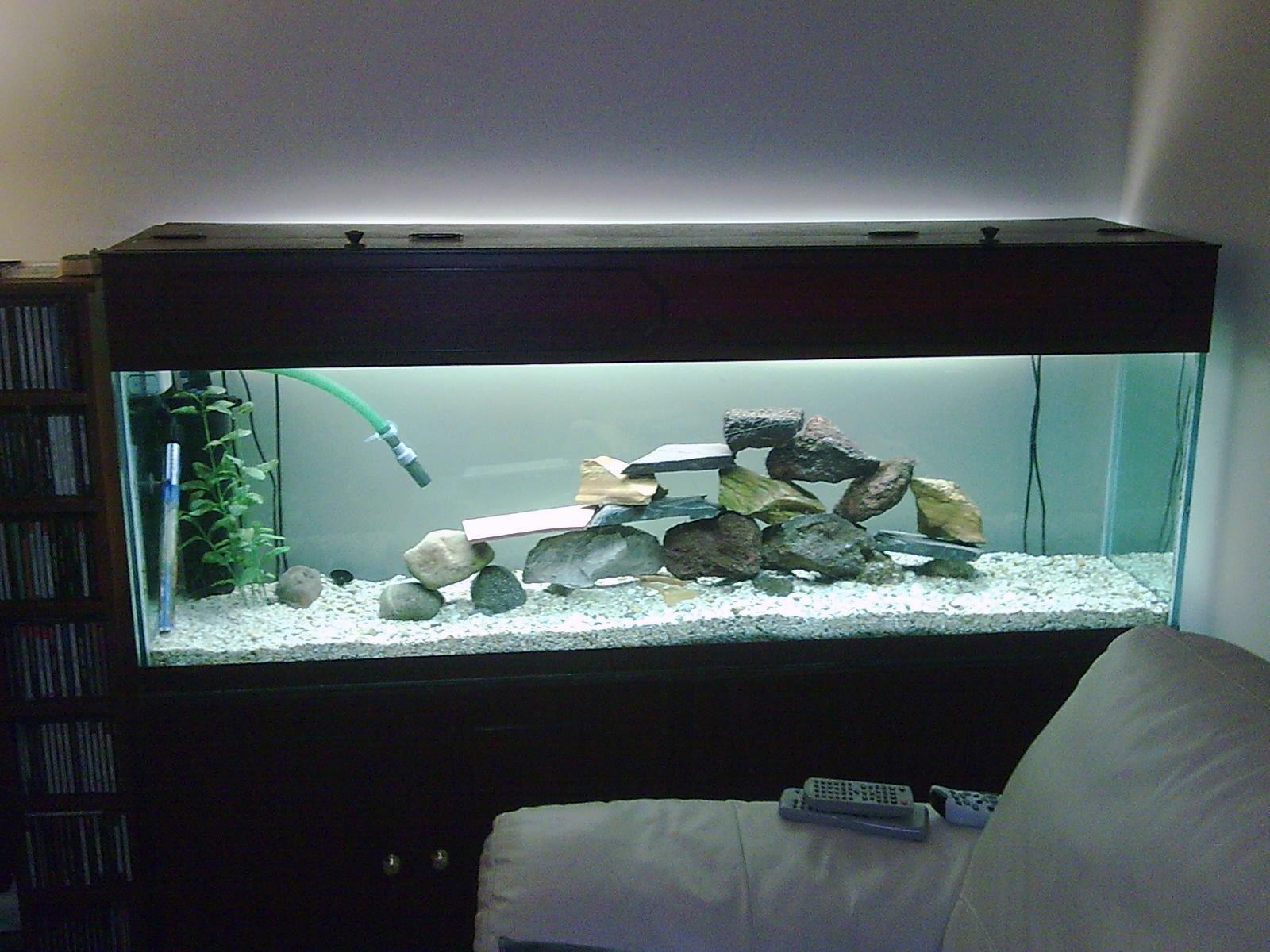 Fish tank 70 gallon 70 gallon malawi hap for Fish tank measurements