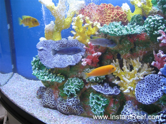 Cichlid freshwater reef tank with artificial for Artificial coral reef aquarium decoration uk