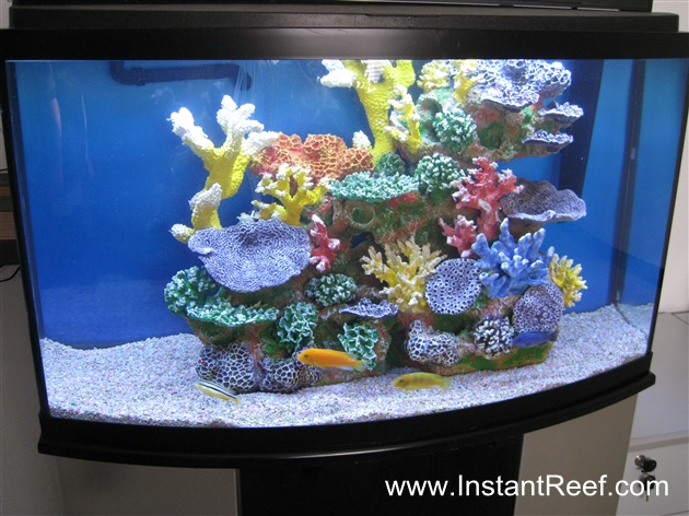 Tank examples cichlid freshwater reef tank for Artificial fish tank