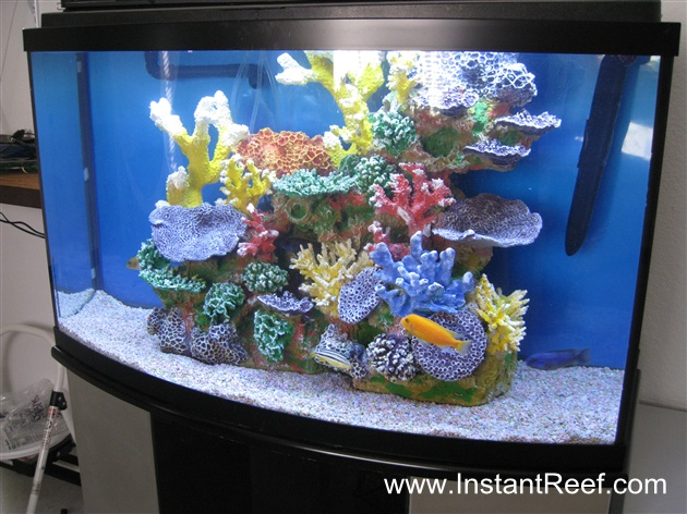 Tank examples cichlid freshwater reef tank for Artificial coral reef aquarium decoration inserts