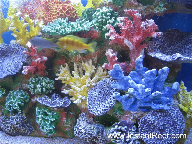 Tank Examples Cichlid Freshwater Reef Tank