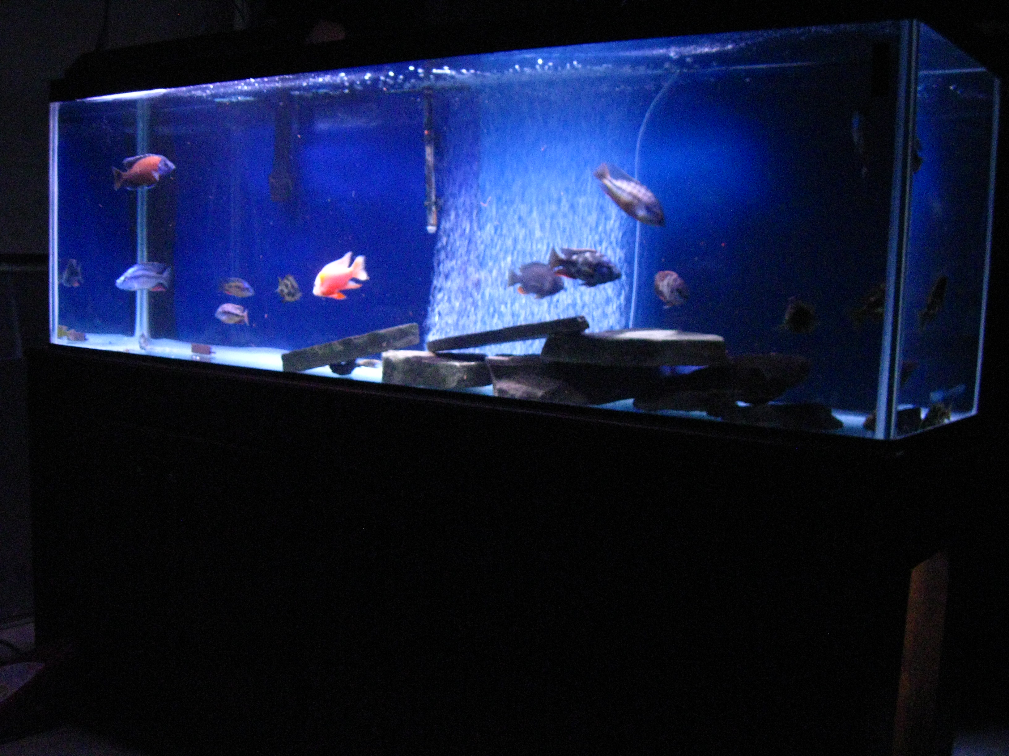 150 gallon african tank for 150 gallon fish tank
