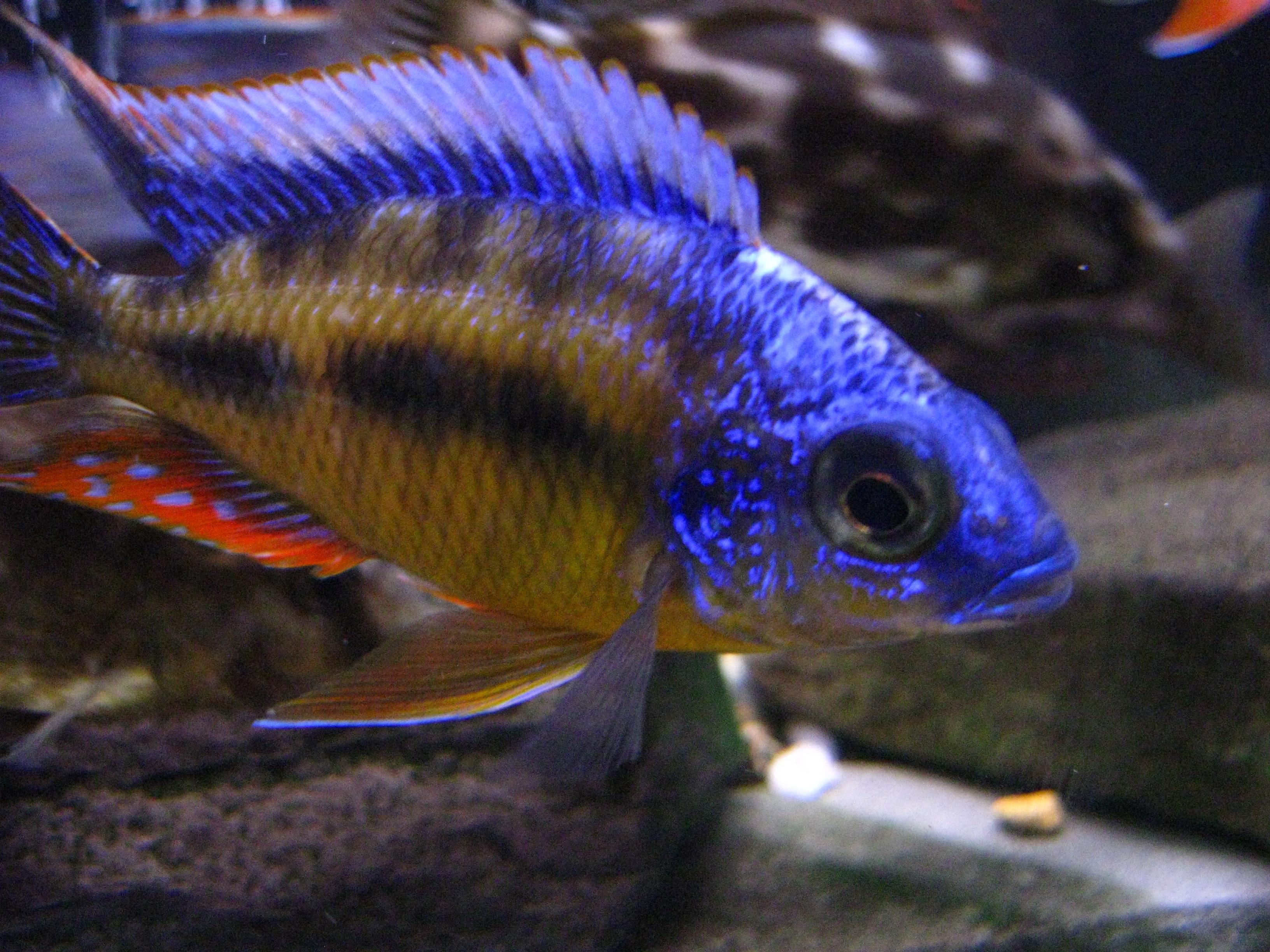 Lil Tawain Reef