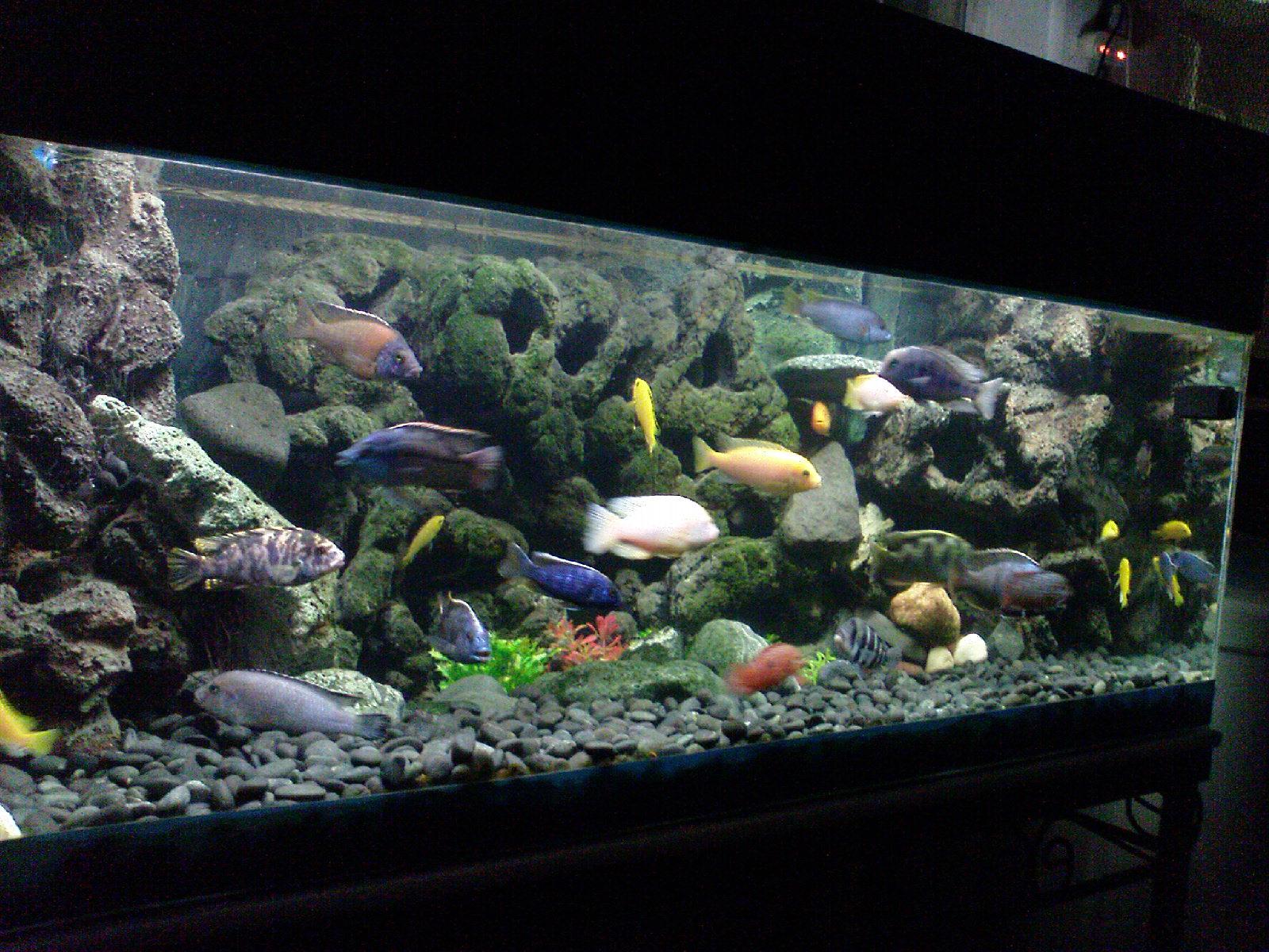 diy 3d aquarium background styrofoam DIY Unixcode