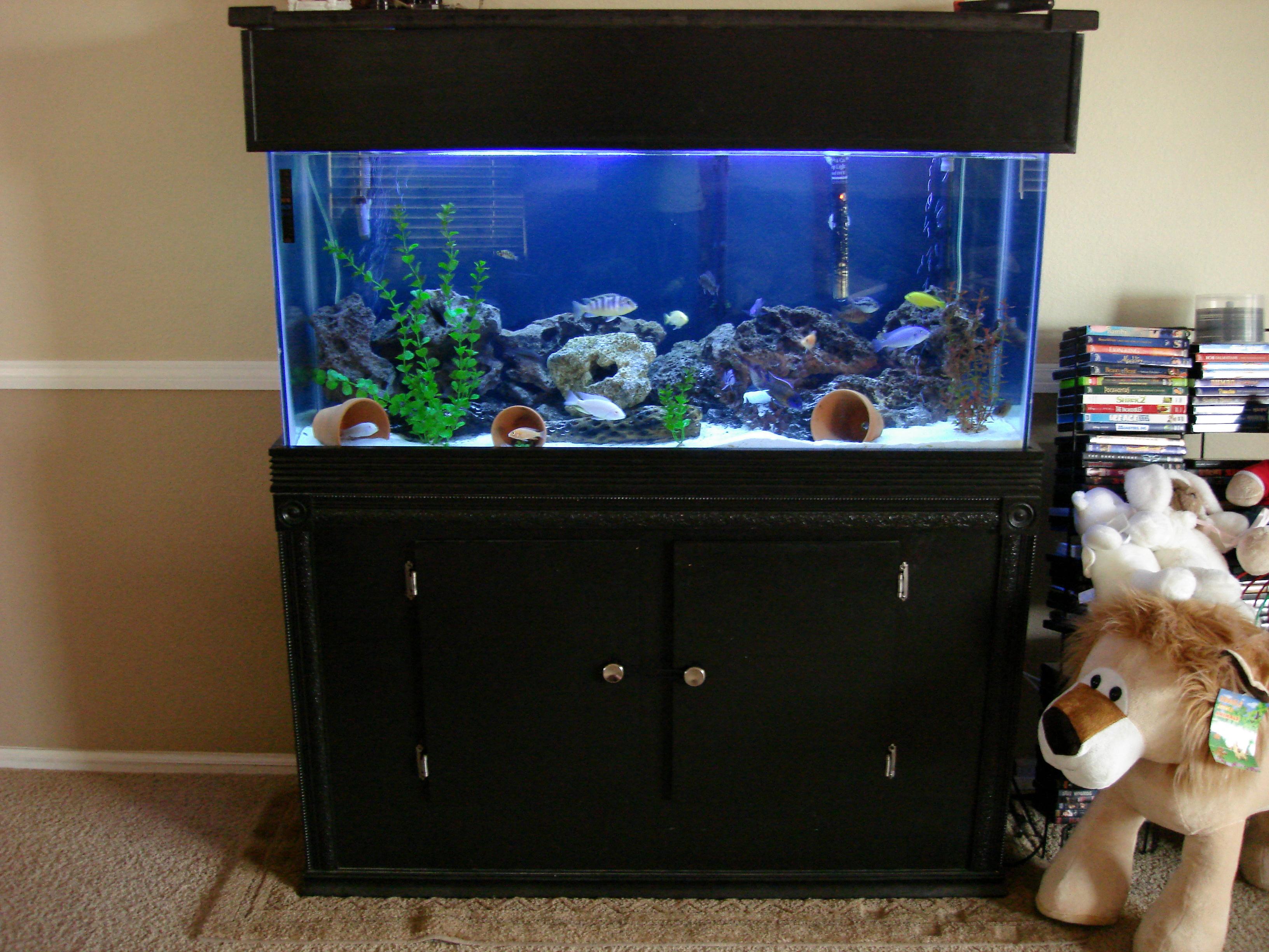 Gl Canopy Aquarium 1000 Ideas & 55 Gallon Aquarium Canopy - 1000+ Aquarium Ideas