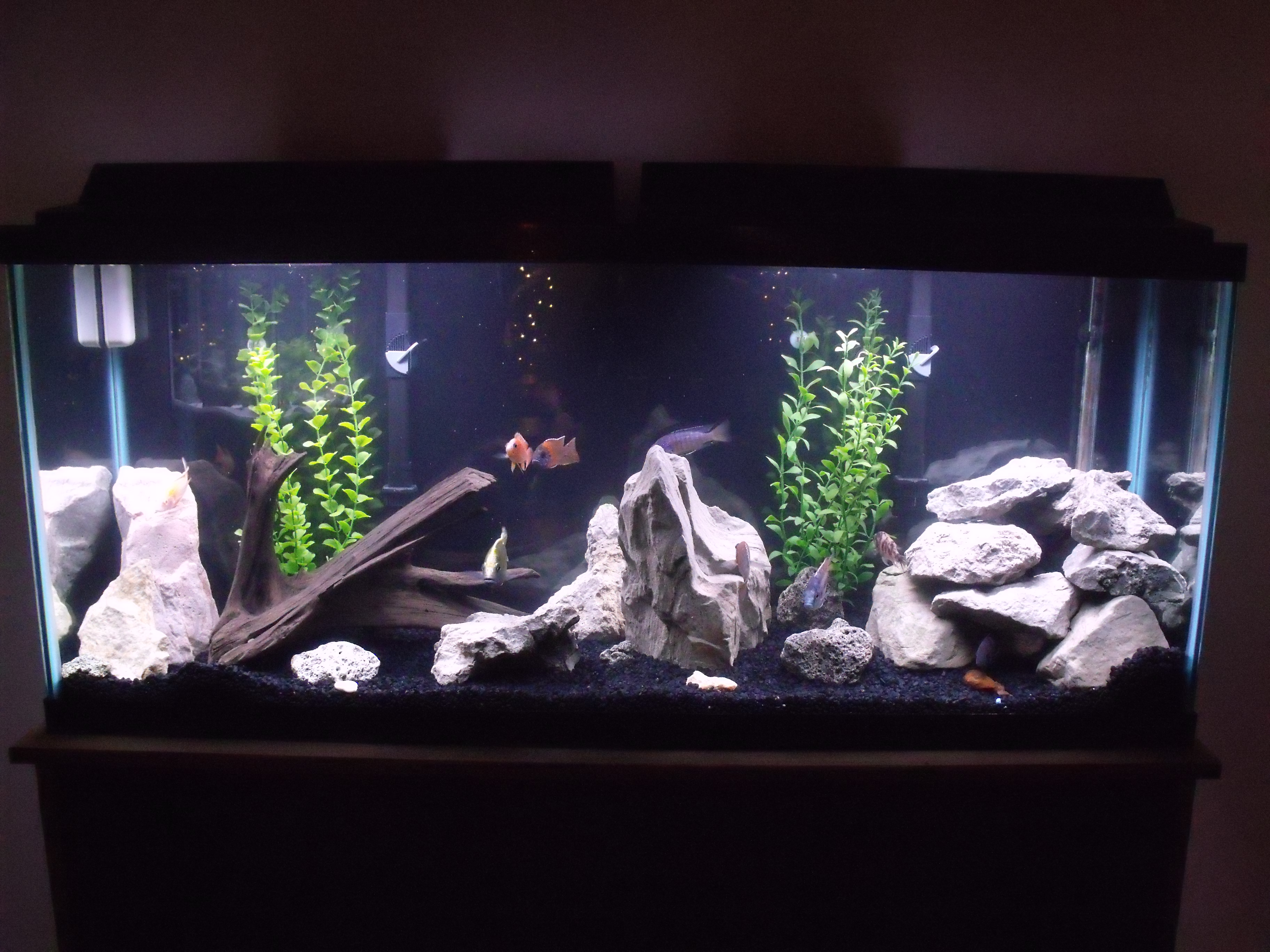 55 fish tank 55 gallon freshwater planted fish tank for 55 gallon fish tank