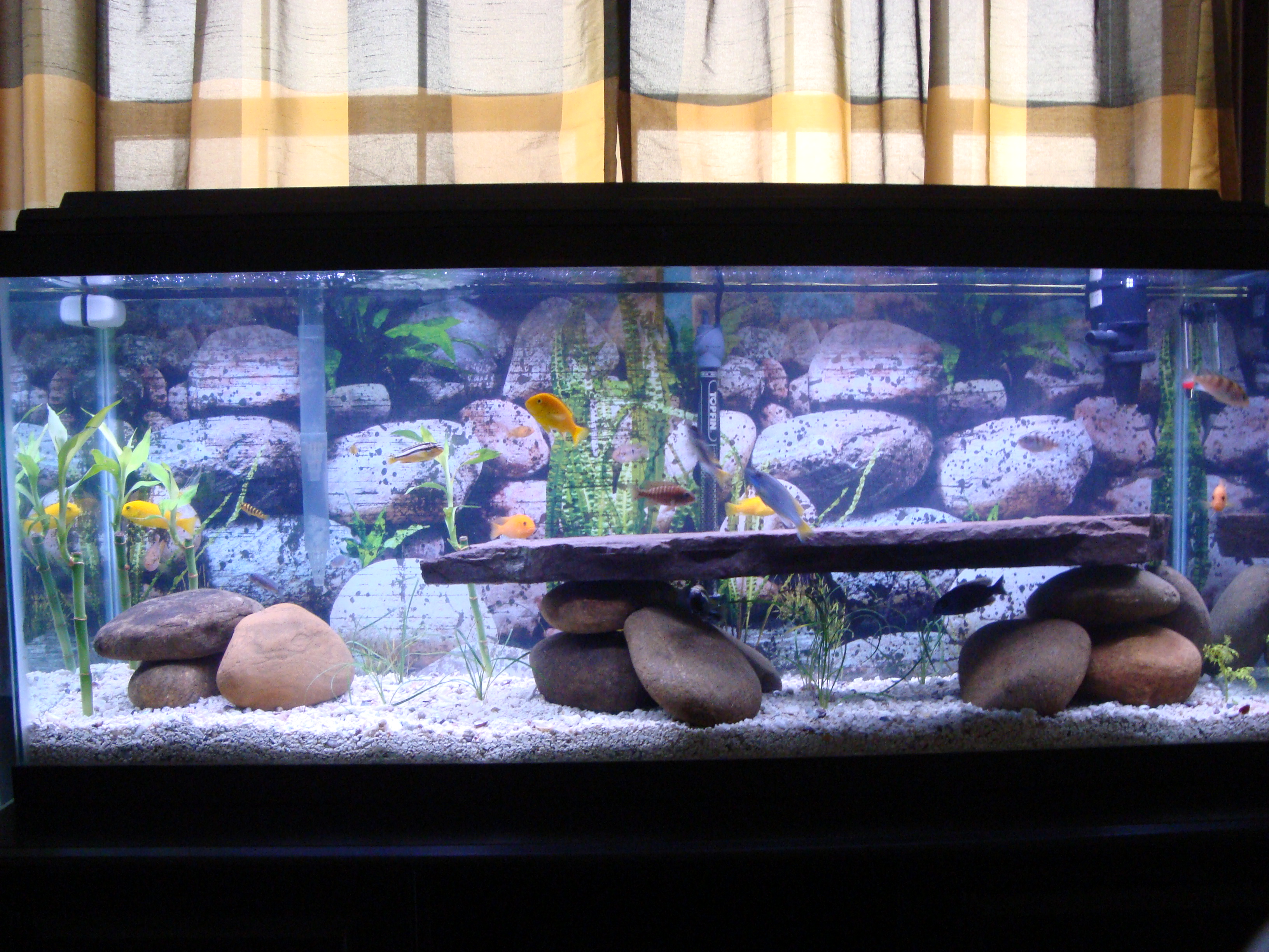 Cichlid Tank Salt African Cichlid Tank