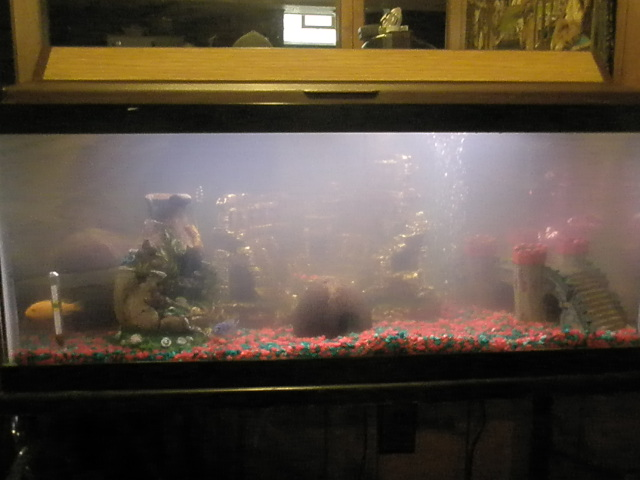 Cloudy tank with in 2 days of water change for My fish tank water is cloudy