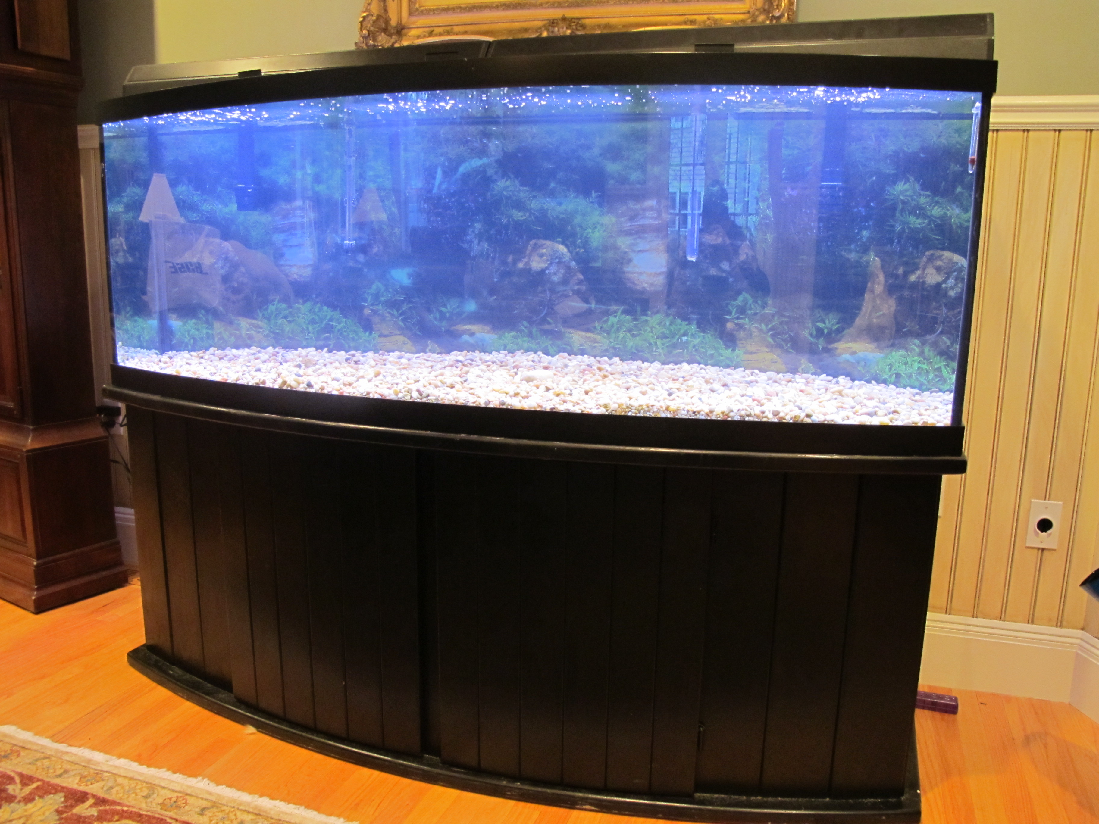 155 gallon bowfront for Bow fish tank