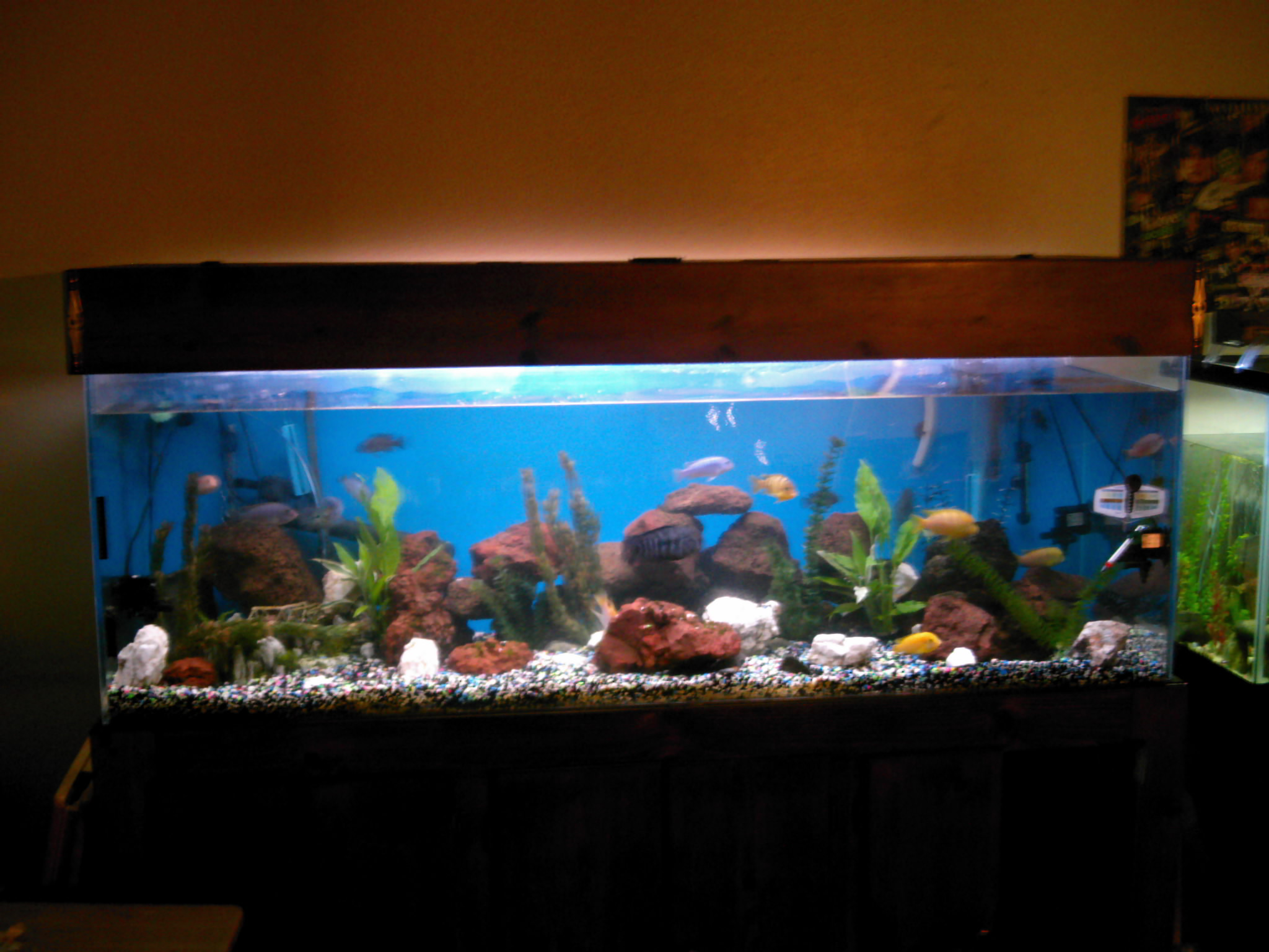 Pin my 180 gallon in wall aquarium made from starphire for 180 gallon fish tank
