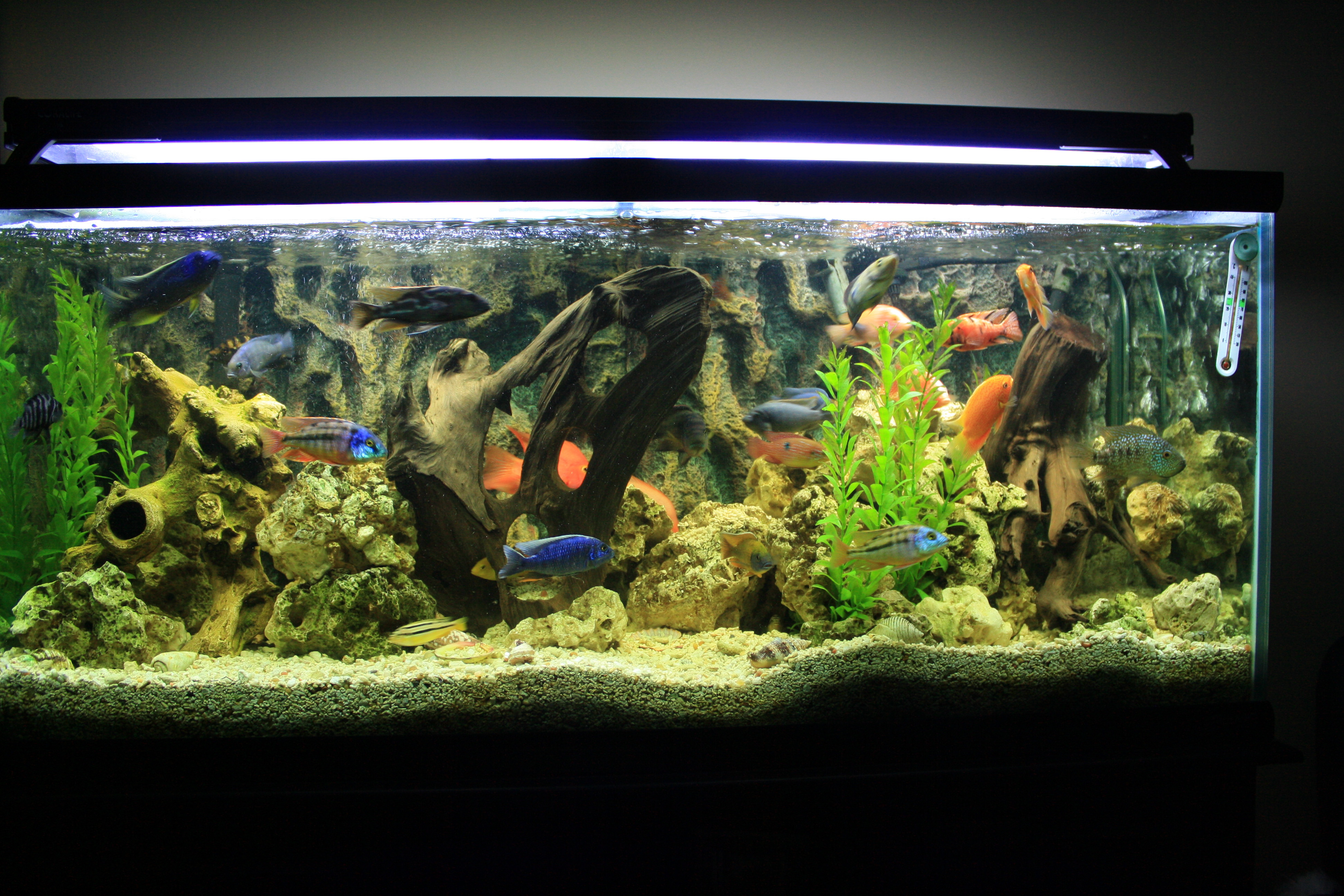 Fish tank movie 48x12x20 community tank images for Best community fish