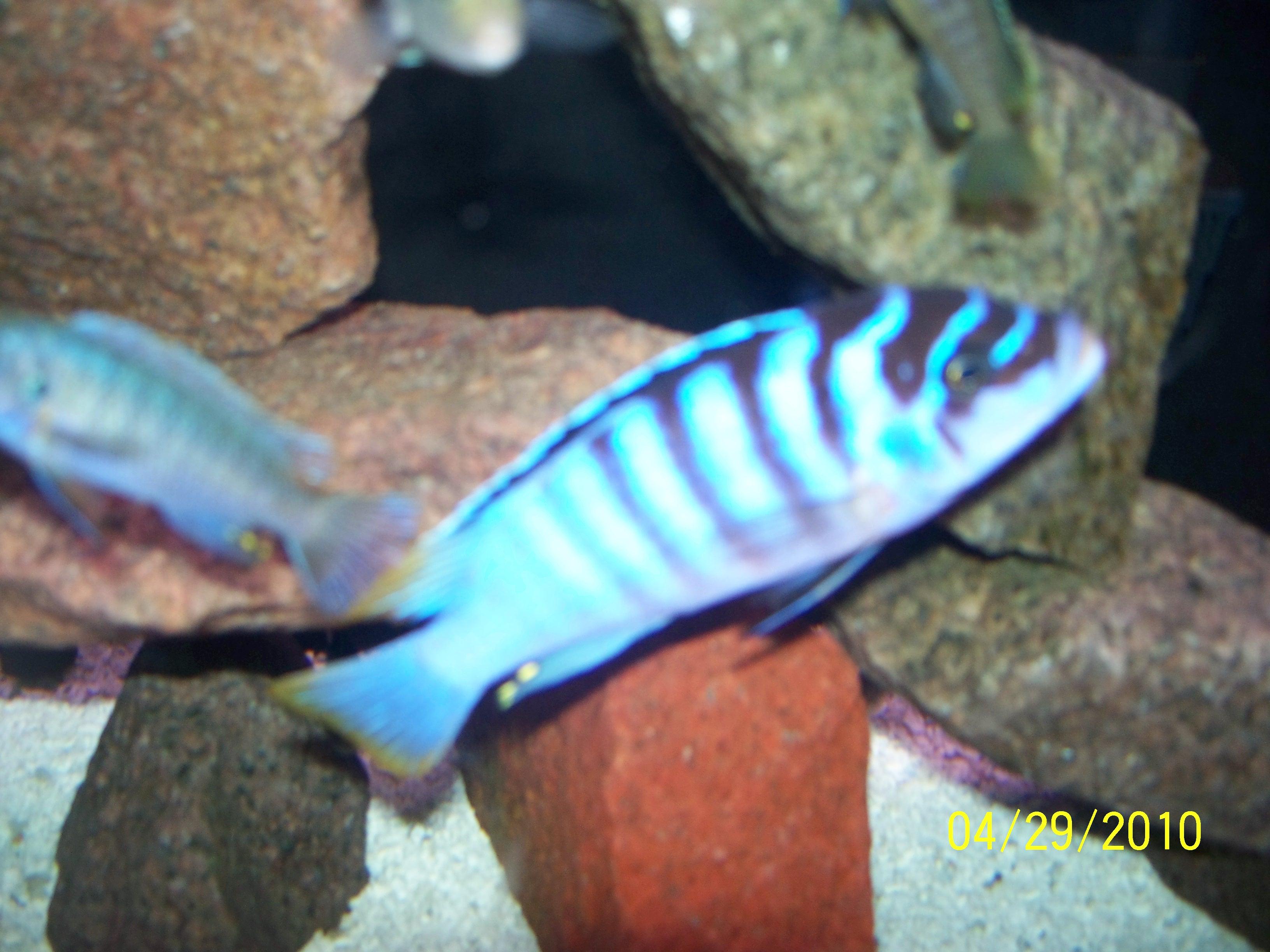 Lewino Reef Chilumba
