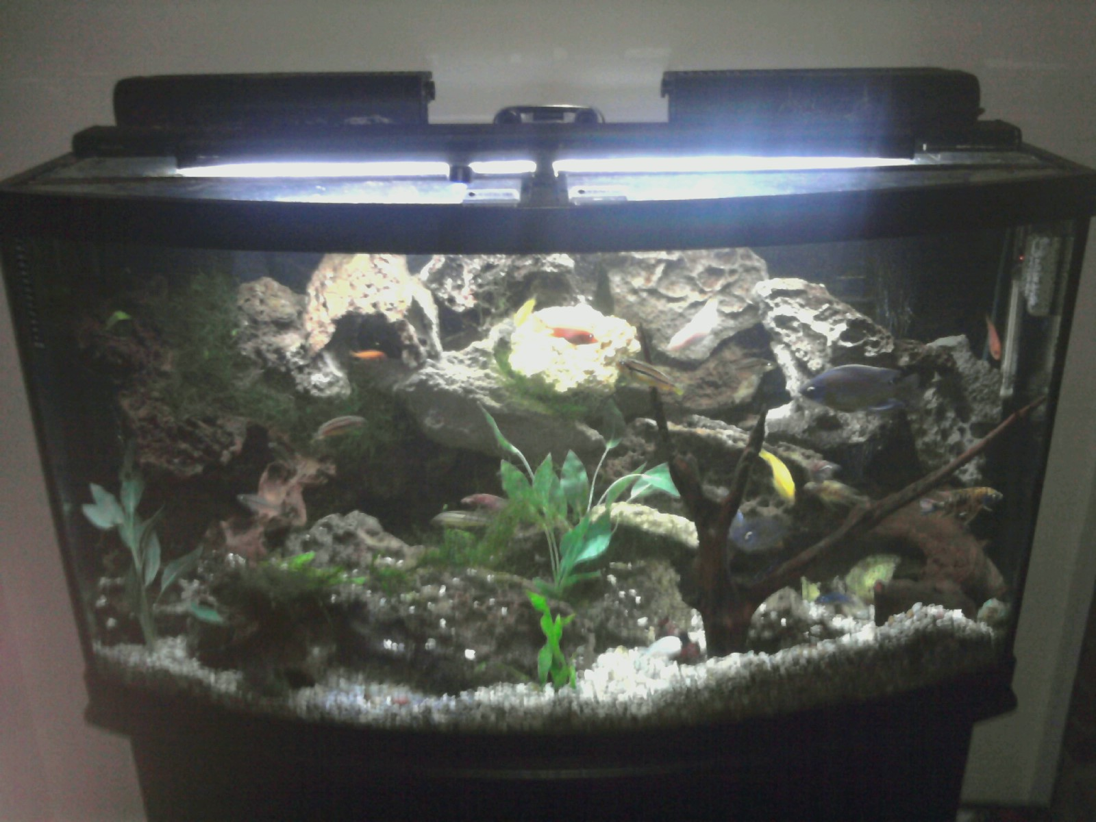 Tank examples my mini malawi for African cichlid tank decoration