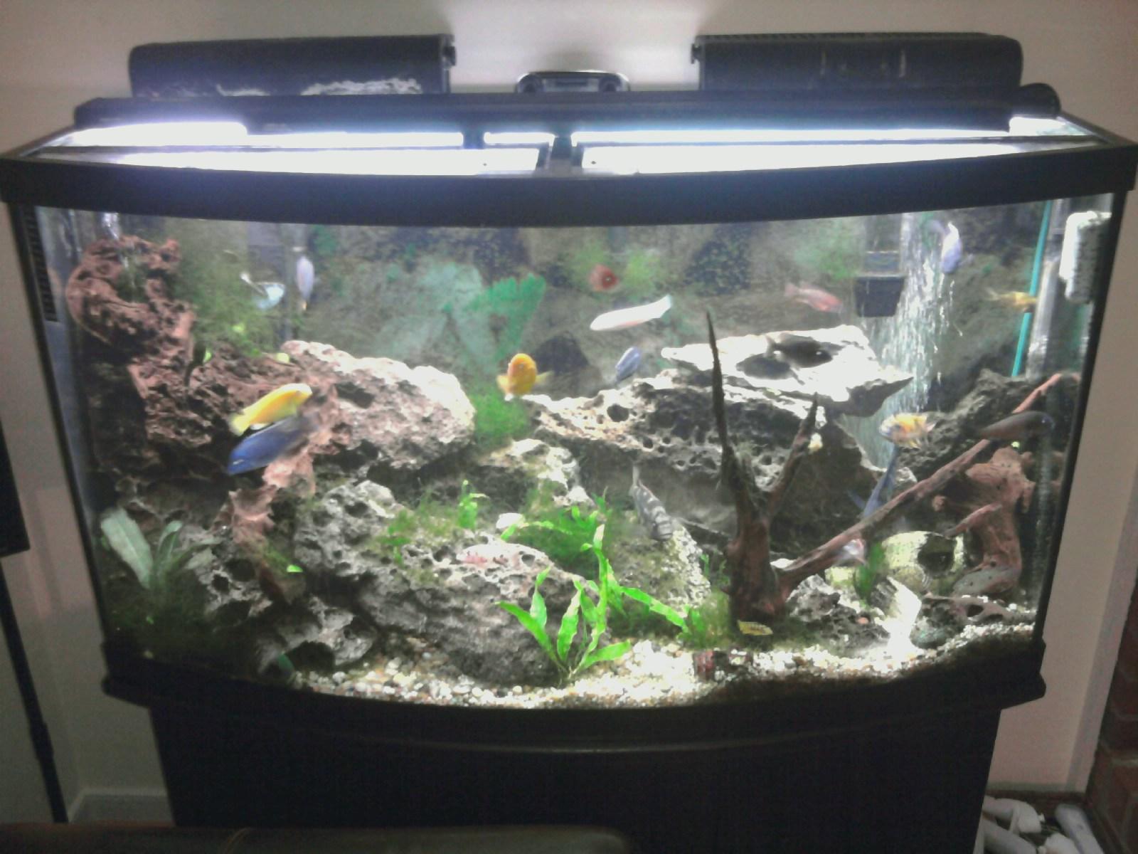 Photo store glass bowfront aquarium download for 37 gallon fish tank