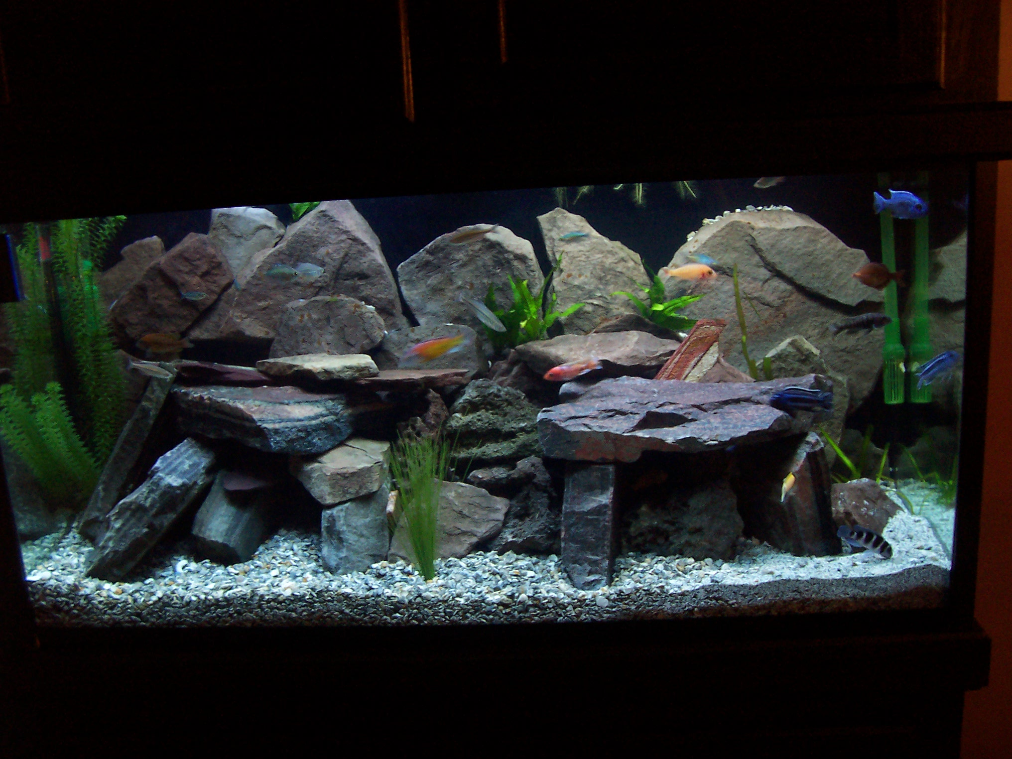 Tank examples for African cichlid rock decoration