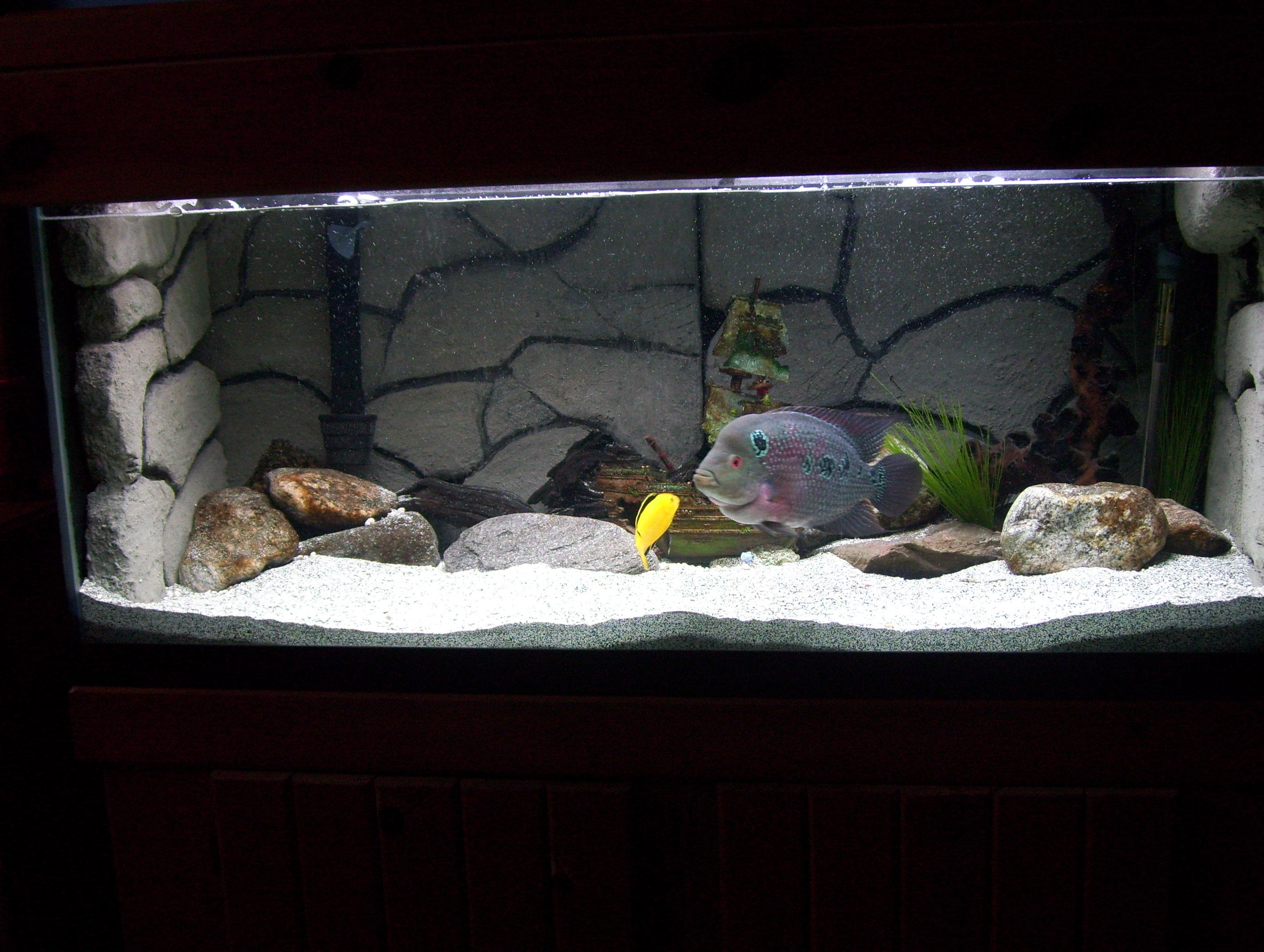 75 gallon aquarium background dramatic aquascapes diy for Diy fish tank