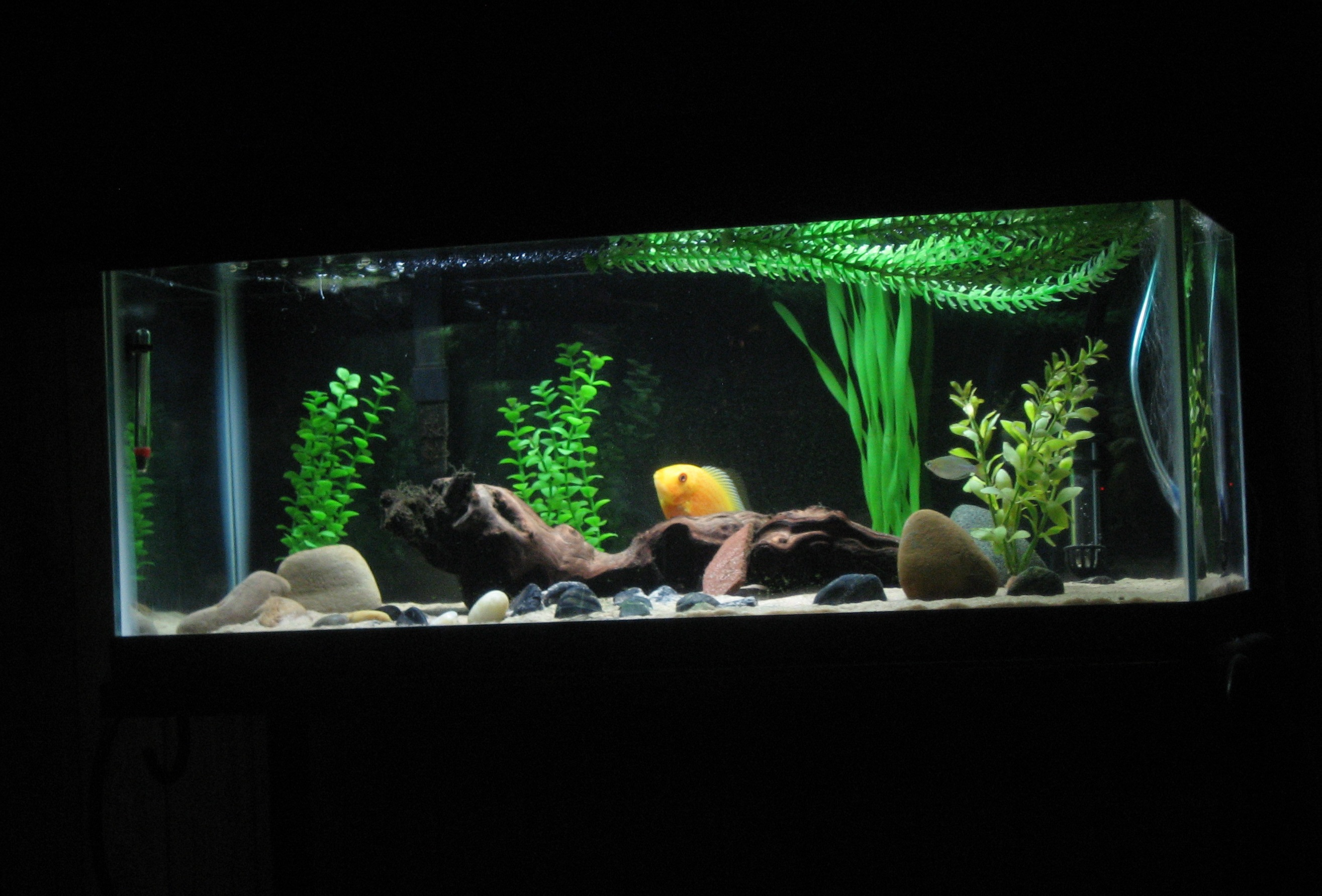 20 gallon tank in cm tank examples 20 for How long is fish good for