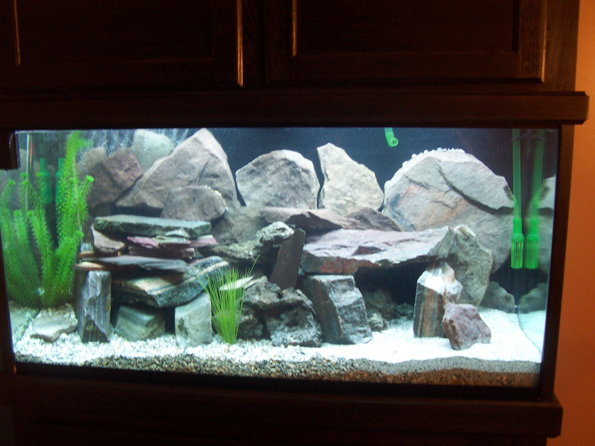 100 gallon fish tank setup tank examples for Fish pond setup
