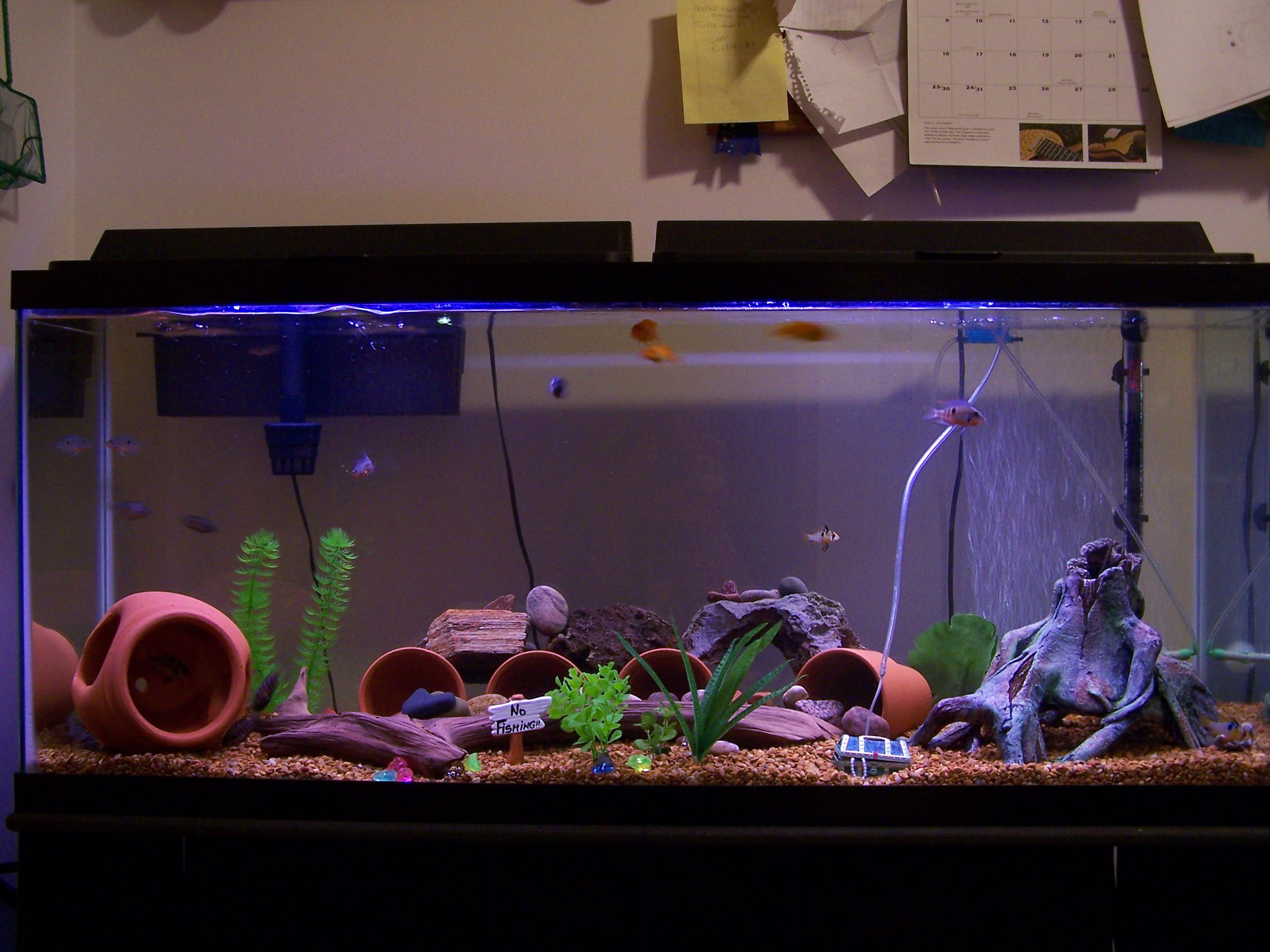 Cichlids Com 55 Gallon Cichlid Aquarium