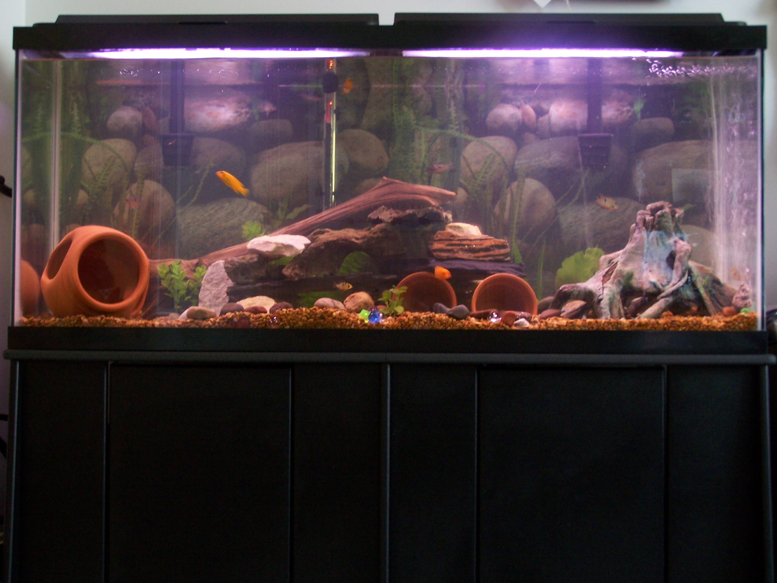 55 gallon cichlid aquarium improved for 55 gallon corner fish tank