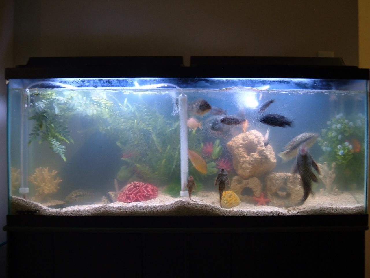 Cichlid Tank Salt Saltwater or Cichlid Tank