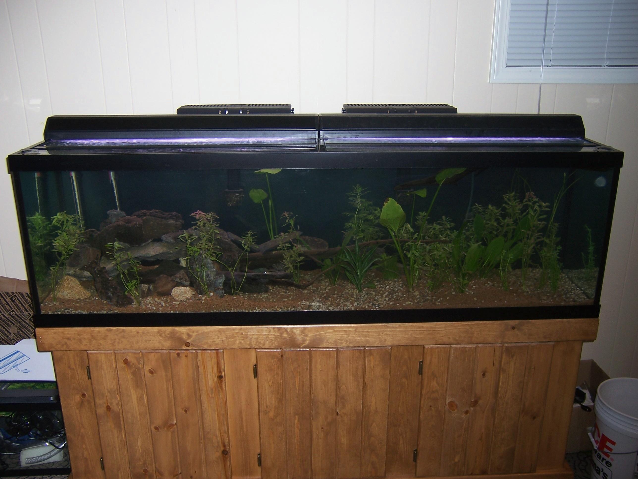 cichlids.com: 125 Gallon Crenicichla/Predator South American Tank