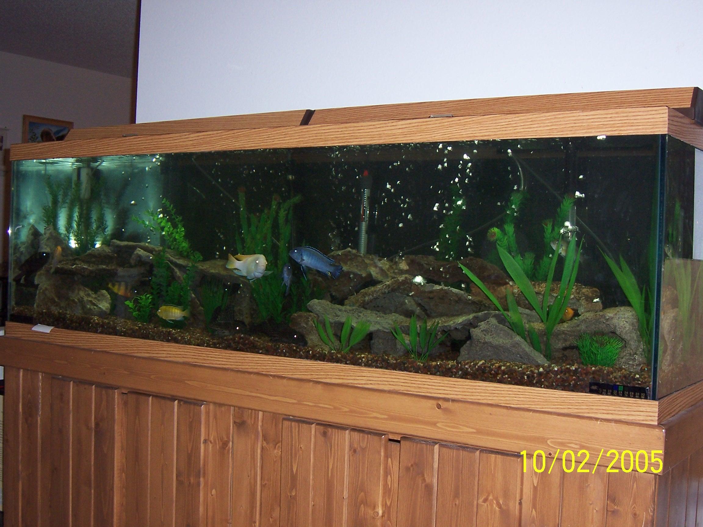 cichlids.com: 125 gallon community tank
