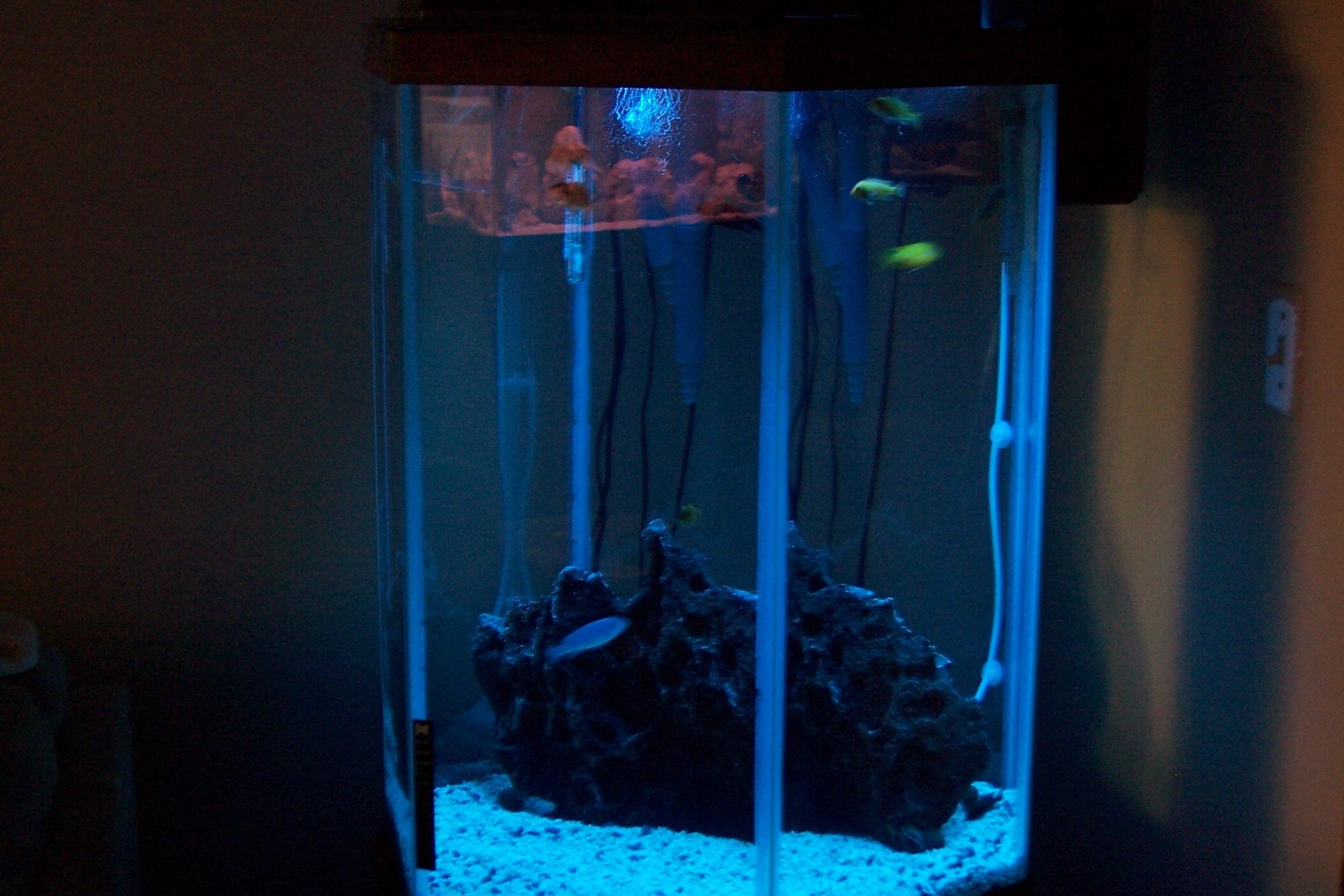 My 55 gal hexagon chiclid tank for 55 gallon hexagon fish tank