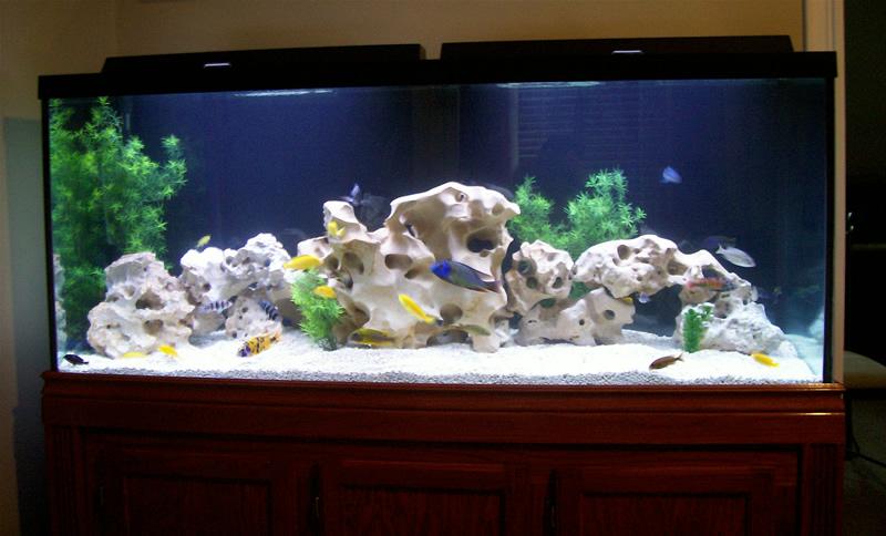 120+Gallon+Fish+Tank+Glass ... gallon fish tank 180 gallon fish tank ...