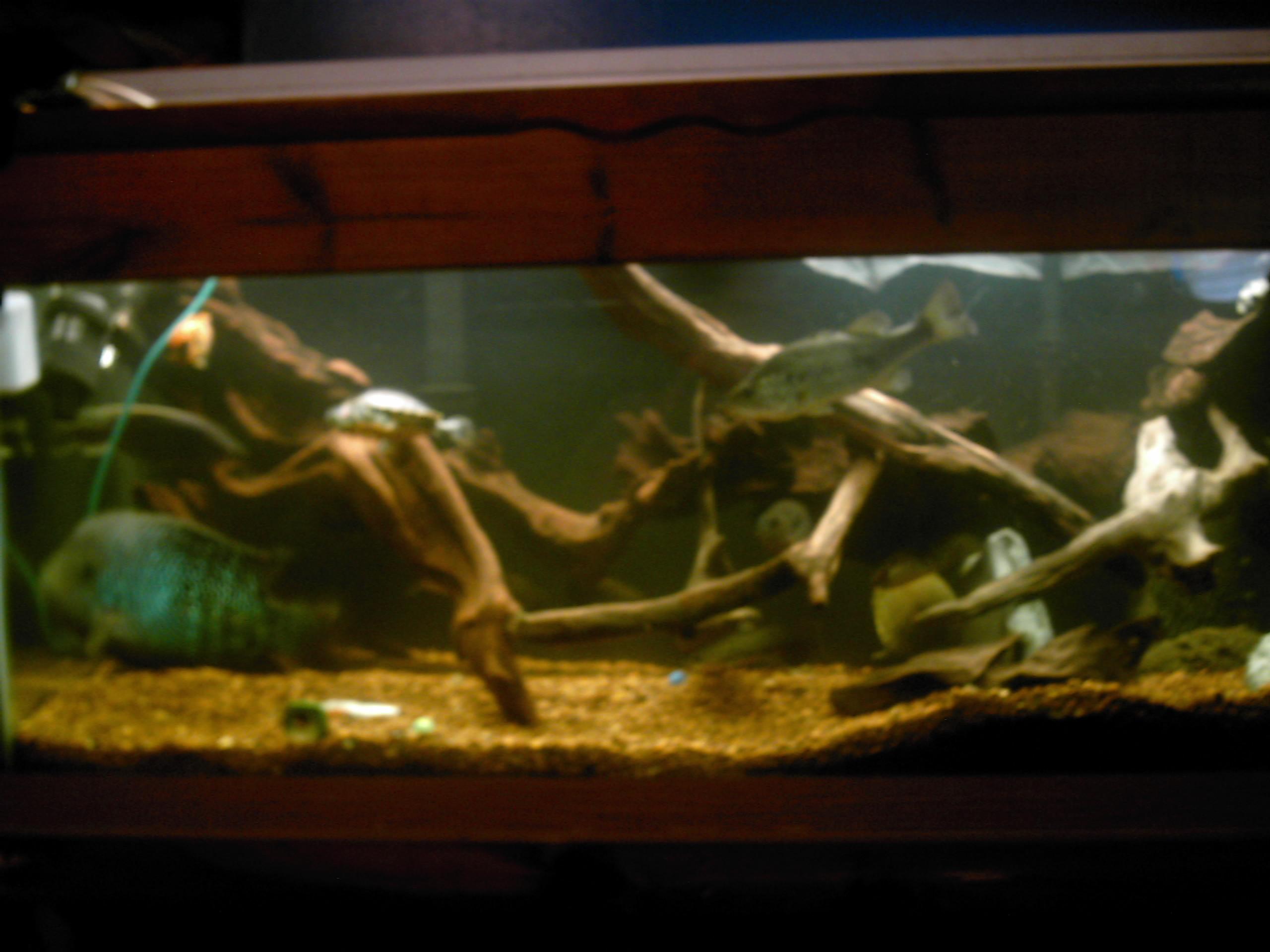 cichlids.com: 75 gallons