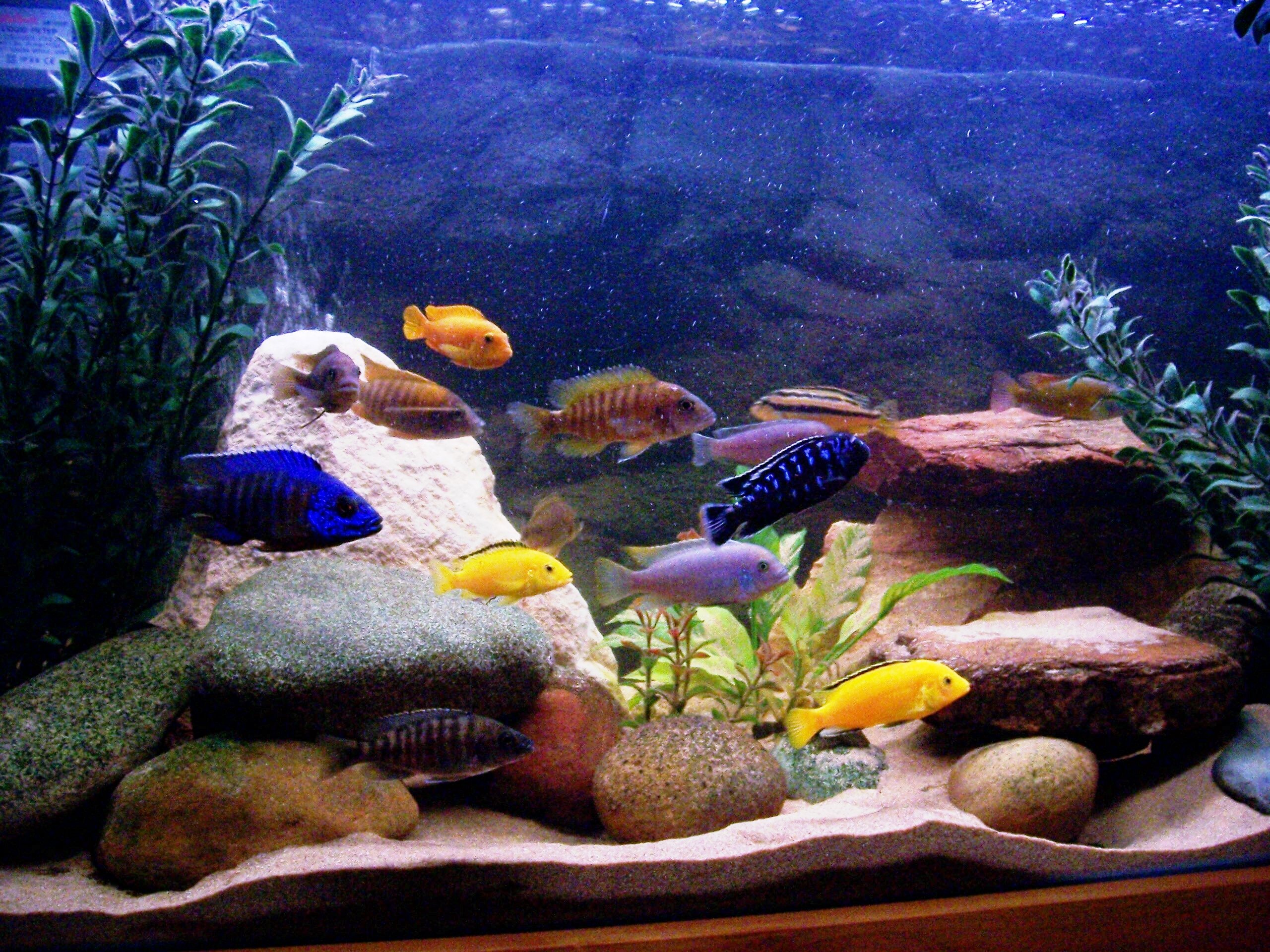 Luke 39 s cichlid tank for 10 fish in a tank riddle
