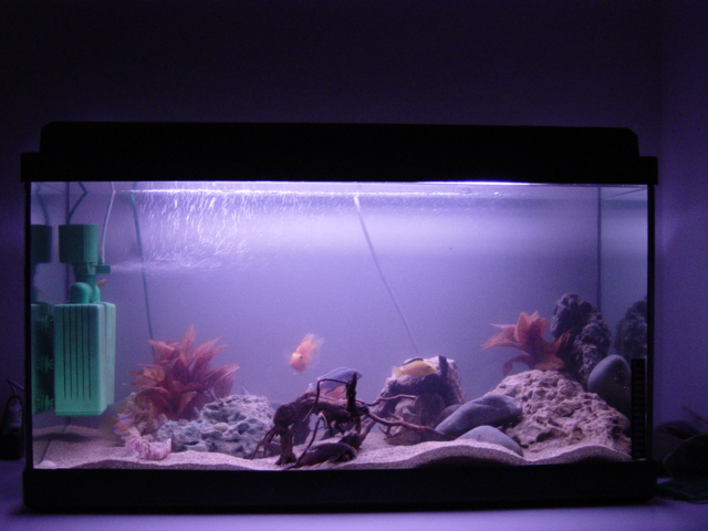 30 gallon fish tank 35 my 30 gallon firemouth tank 102 Thirty gallon fish tank