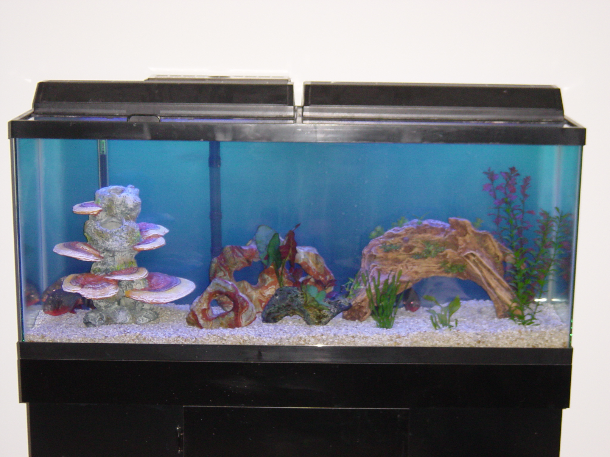 55 Gallon Fish Tank Tall 55 Gallon Aquarium Set 80 In
