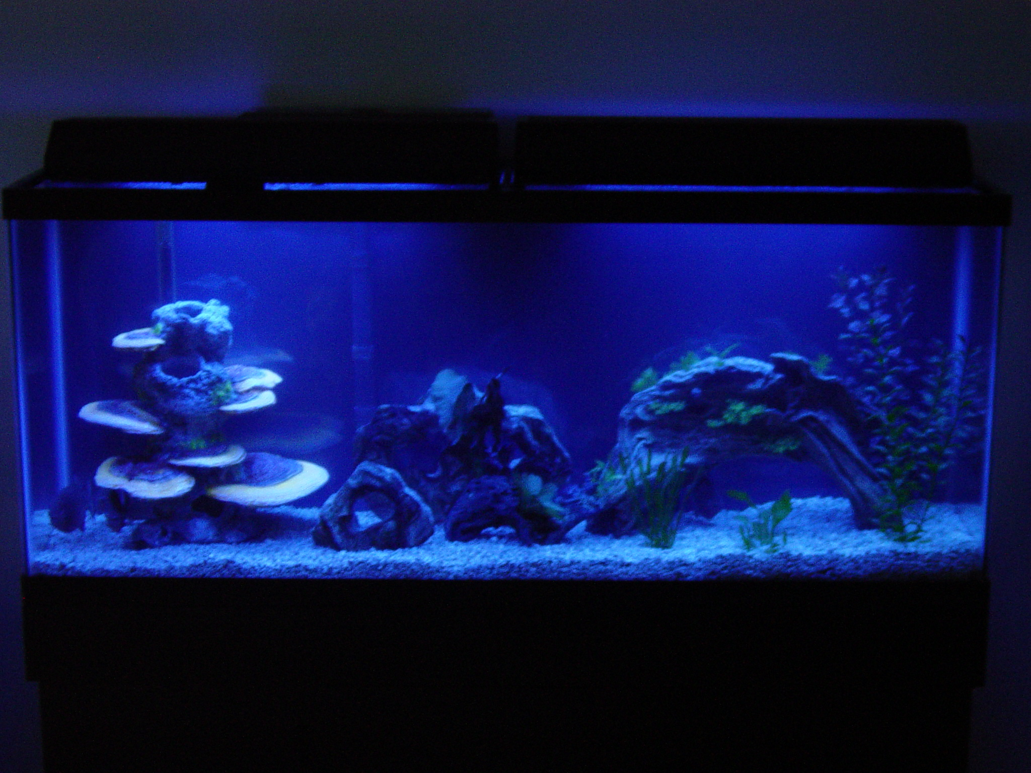 55 gallon red belly tank with 100 actinic for 10 fish are in a tank riddle answer