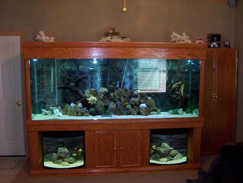 Lil jim 39 s new 365gal aquarium on my custom for Custom made fish tanks