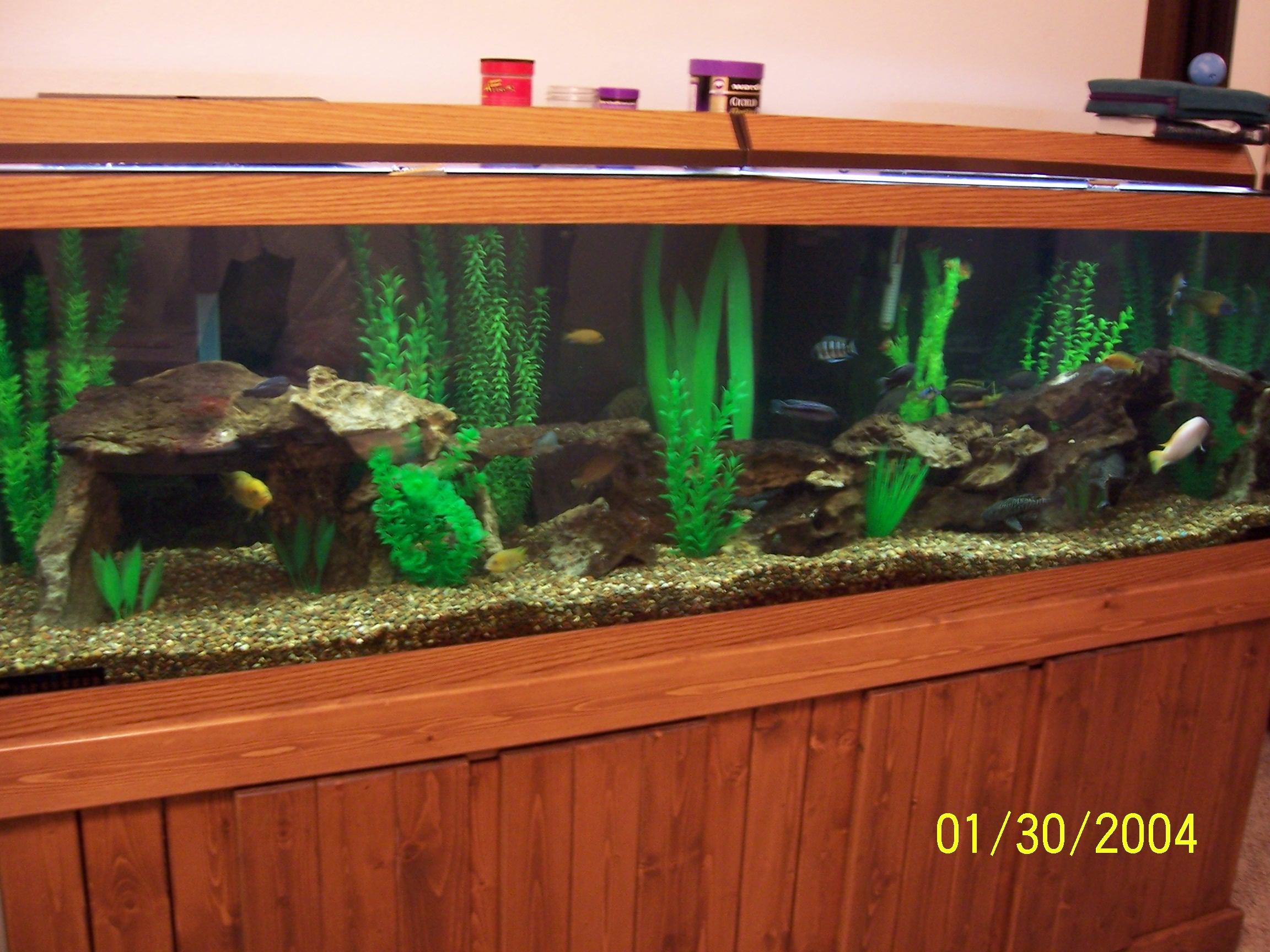 cichlids.com: 125 gallon assorted cichlid tank