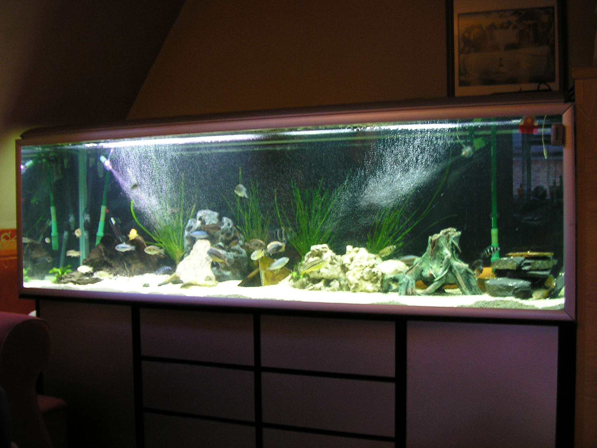 My new 200 gallon malawi setup just added for 125 gallon fish tank for sale