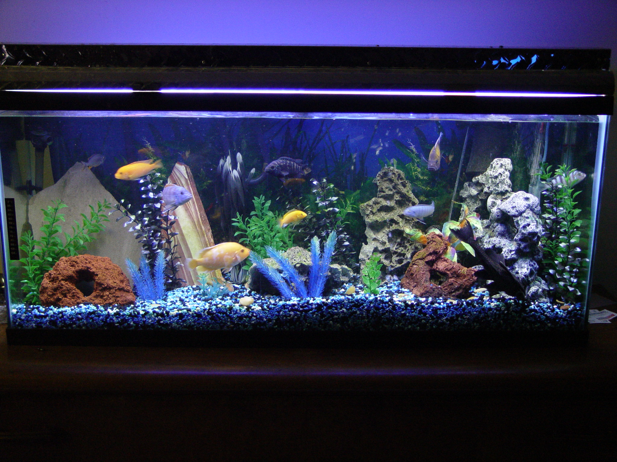My first cichlid tank 55 gallon for 55 gallon aquarium decoration ideas