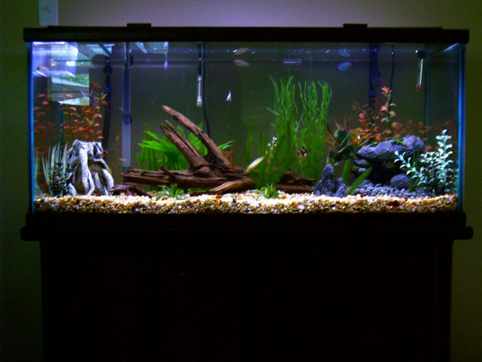 75 gal driftwood tank for Driftwood for fish tank